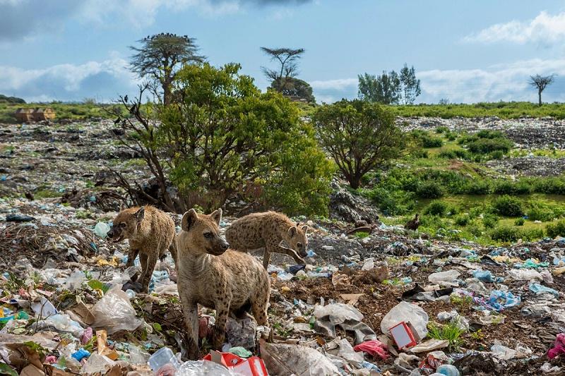 塑料垃圾无法降解