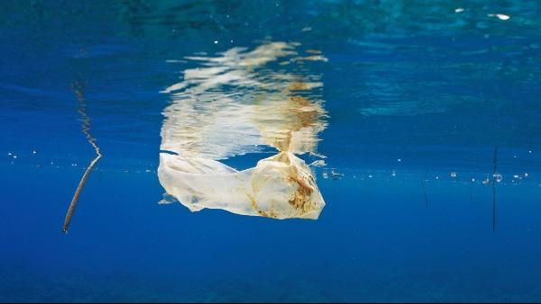 塑料垃圾——海洋的眼泪